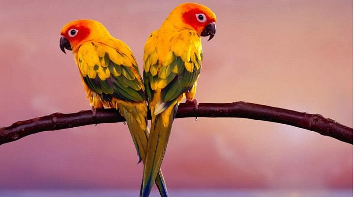 Vitaminas para pássaros