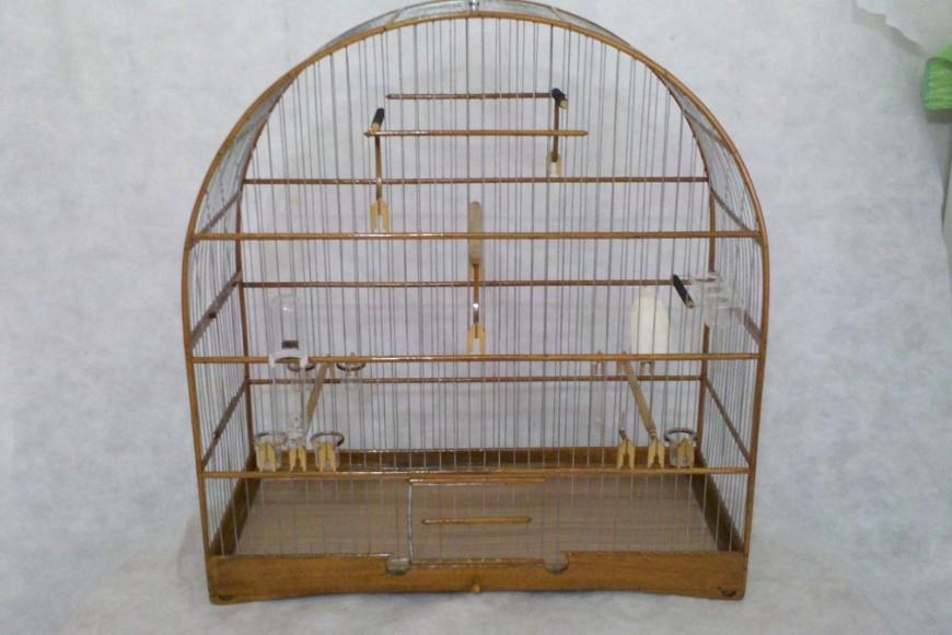 Gaiolas para pássaros silvestres