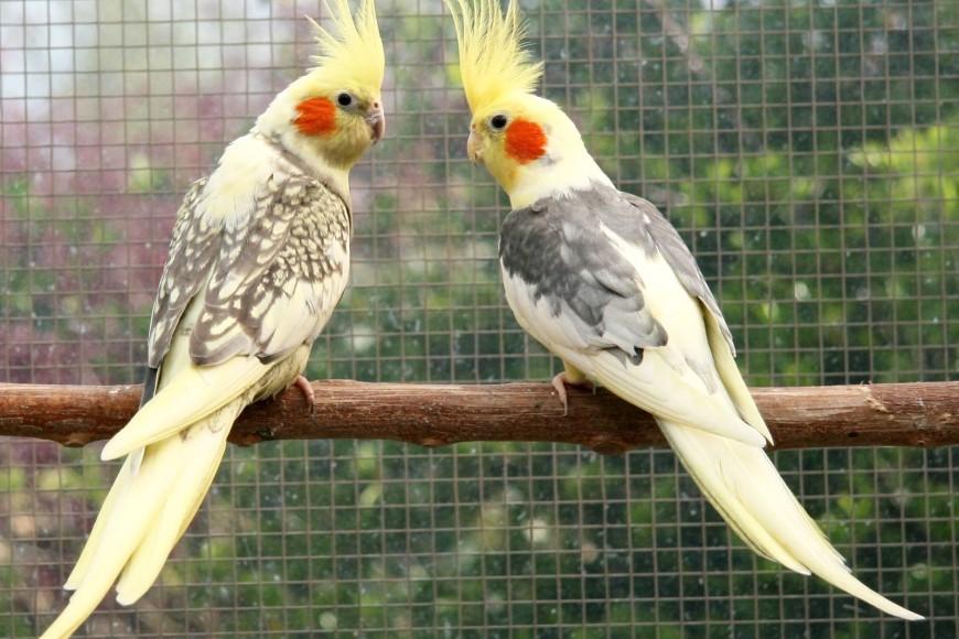 Planejando viajar com seu Pássaro? confira nossas dicas.